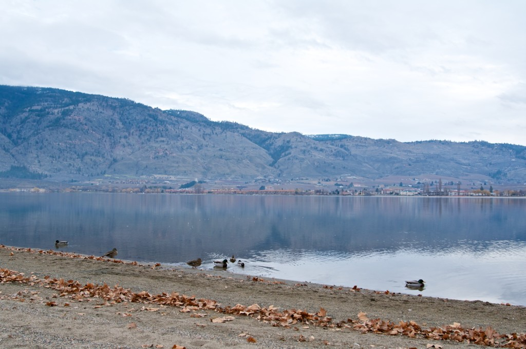 Lunch with the ducks on the beach at Gyro Park in Osoyoos